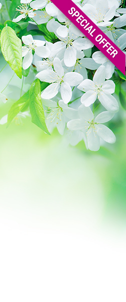 green-web-banner abloomnova | All the best skincare to make you bloom